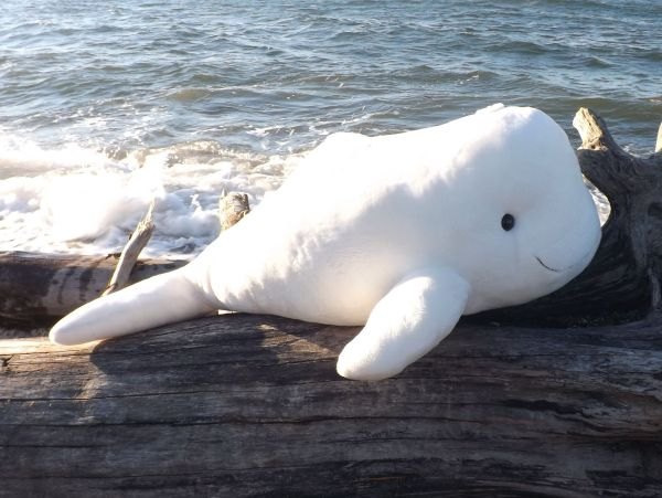 Stuffed Beluga Whales Product Categories