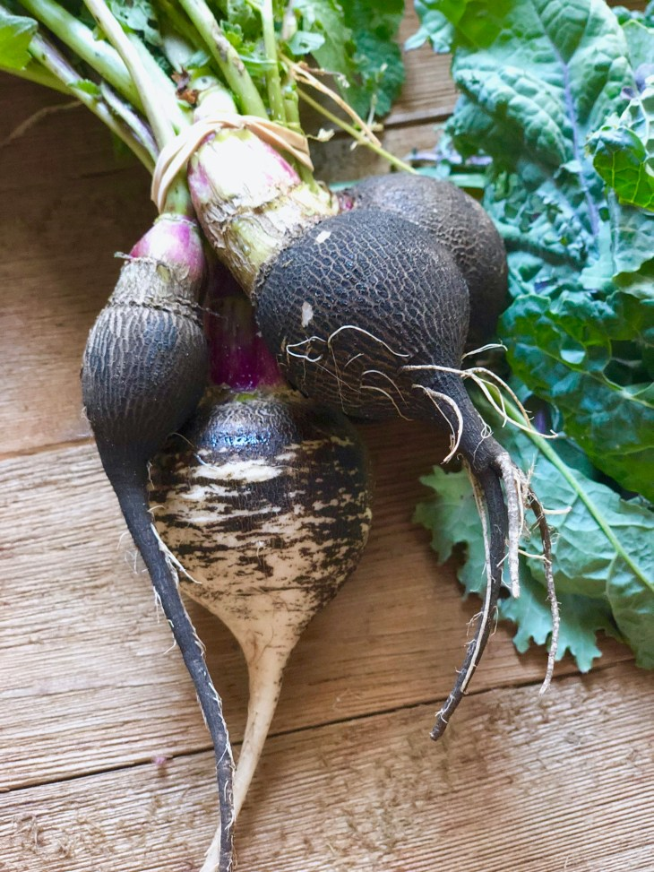 picture of a black radish
