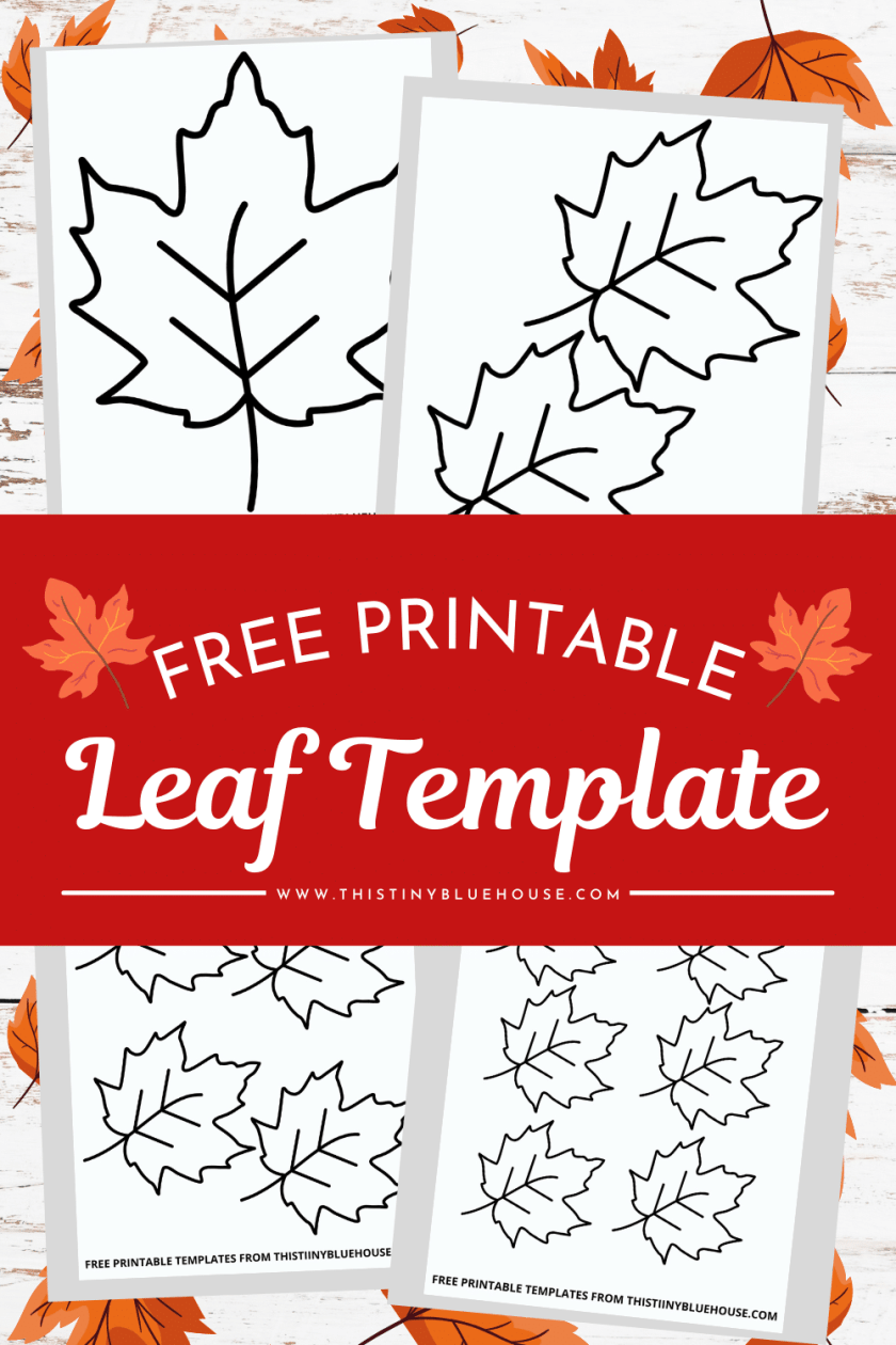 Free Leaf Template Printable (6 sizes of Leaf Outlines Small, Medium & Large)