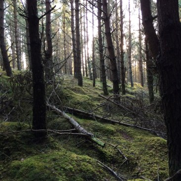 Tom Dubh Woods