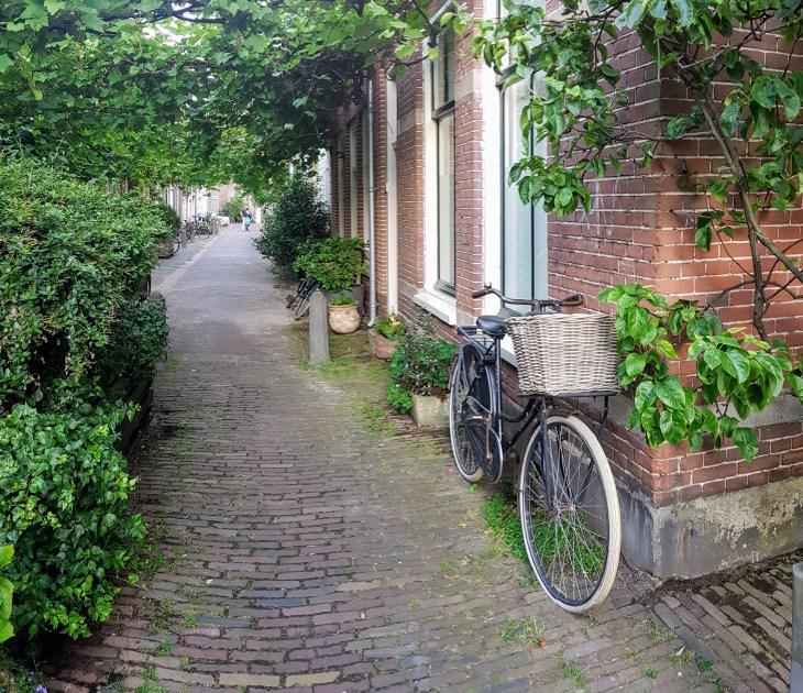 A Leafy Lane in Haarlem