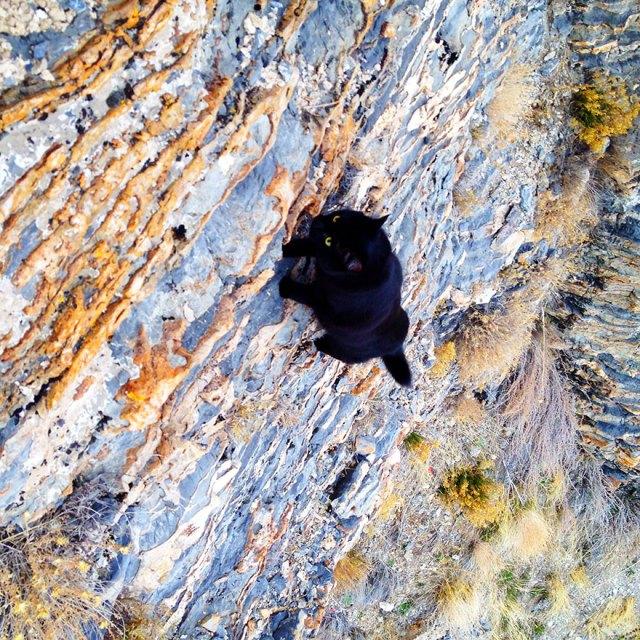 millie-climbing-cat-craig-armstrong-23