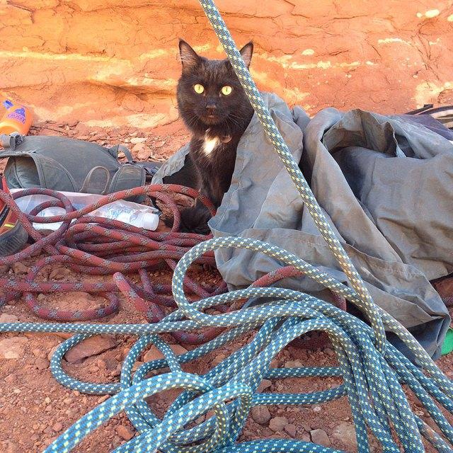 millie-climbing-cat-craig-armstrong-4