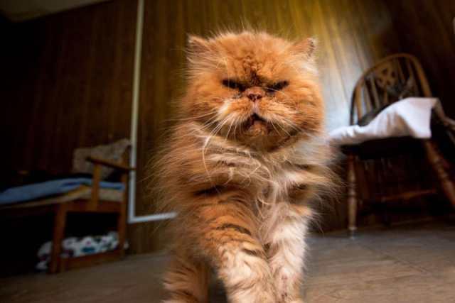 largest-cat-sanctuary-shelter-lynea-lattanzio-8
