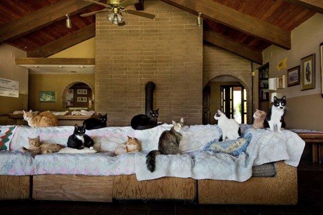 largest-cat-sanctuary-shelter-lynea-lattanzio-12