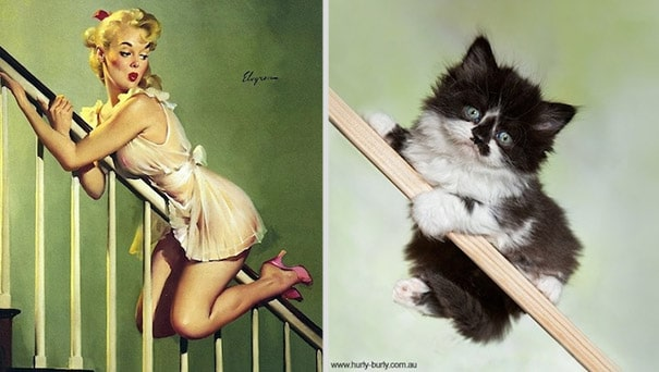 cats-that-look-like-pin-up-girls-20
