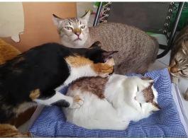 fake cats