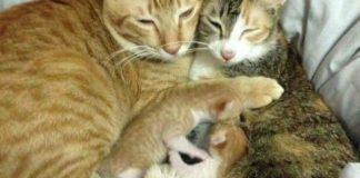 cat-dad