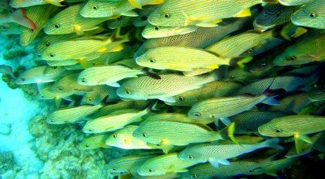 Fish at Belize Barrier Reef