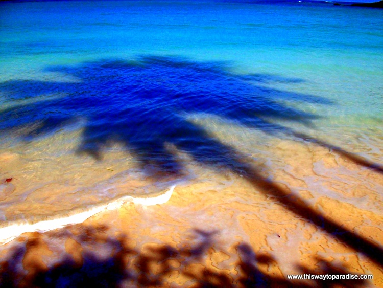 Palm tree shadow in the Dominican Republic