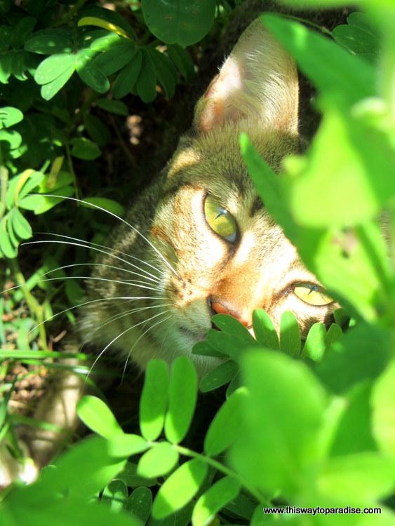 Kitten on Gili Air, Gili Islands