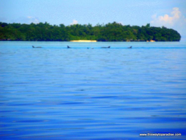 Dolphins off Kai Island