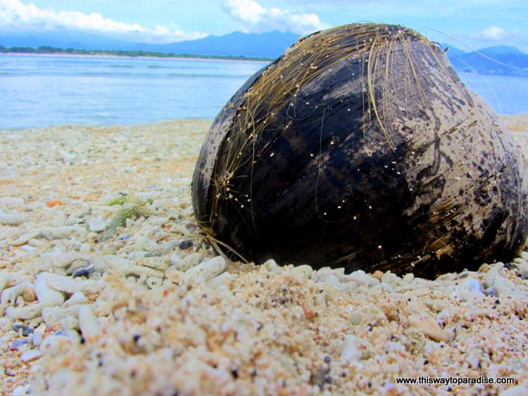 Gili Islands Coconut