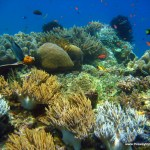 Pictures From Raja Ampat, Papua-The Best Diving Spot In The World!