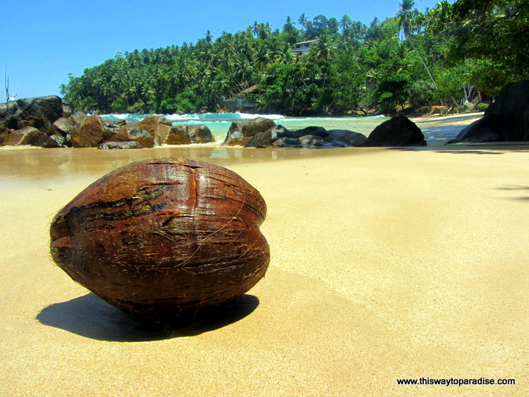 Mirissa Beach coconut