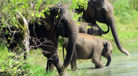 Pictures of Yala National Park