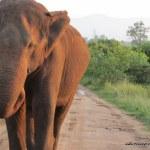 Pictures From Udawalawe National Park, Sri Lanka