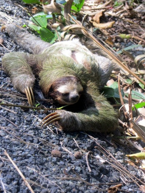 sloth happier than a billionarie interview with Nadine