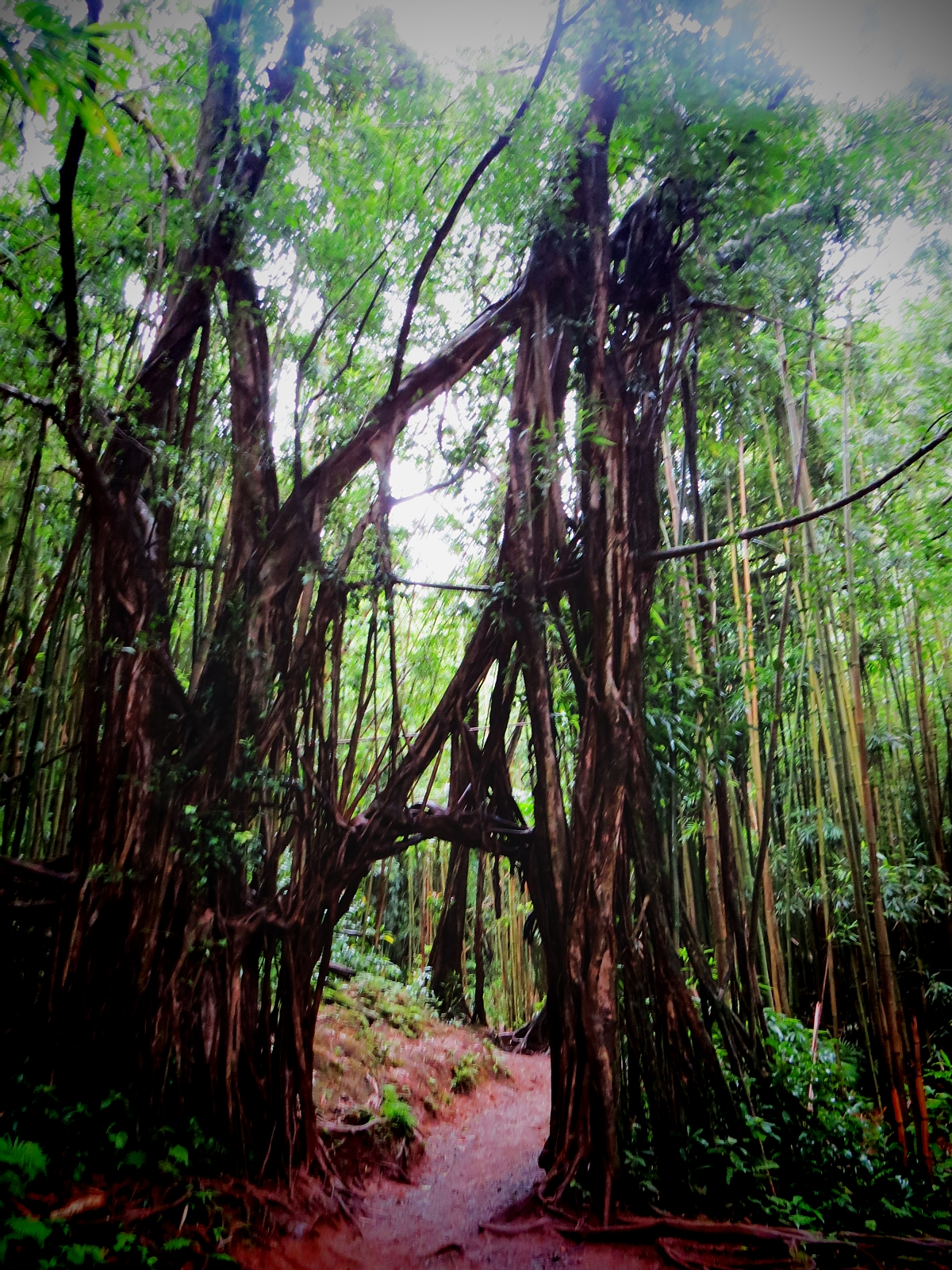 Oahu Hikes: Why You Will Love Manoa Falls