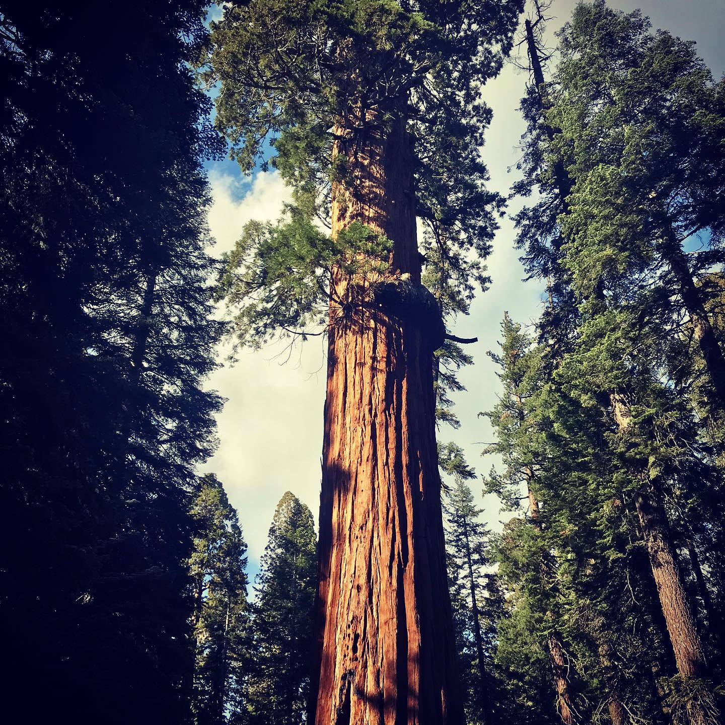 The Sequoia National Park & King's Canyon Travel Guide