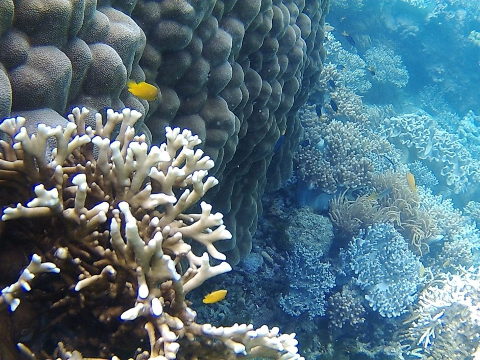 The Great Barrier Reef at the Whitsunday Islands, Australia