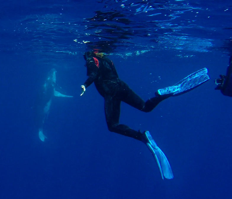 Shaking hands with the humpback whales in Tonga