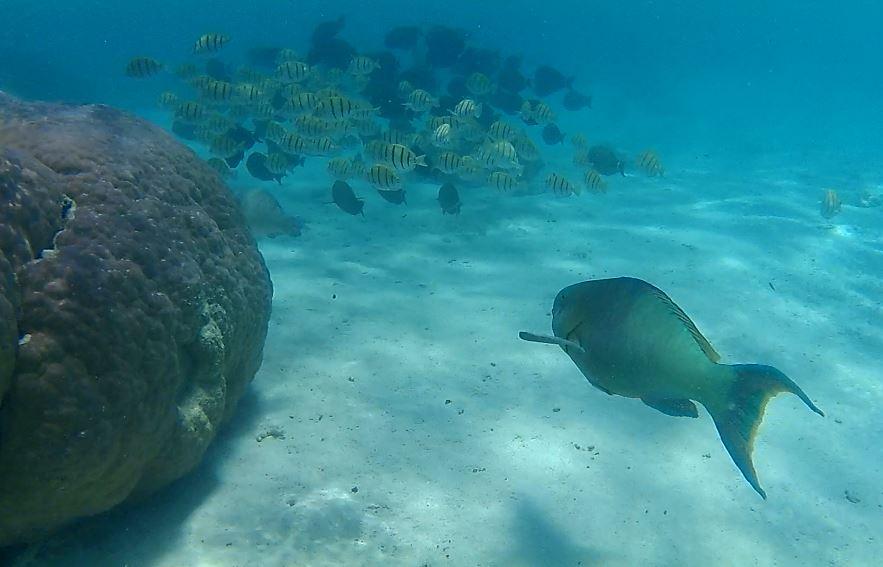 Fish swim in the turquoise waters of the Ningaloo Coast, Australia