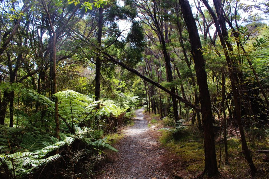 Walking through the forest in the Bay of Islands, New Zealand