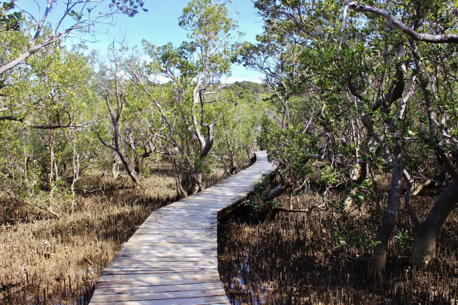 Mangrove forest in the Bay of Islands, New Zealand