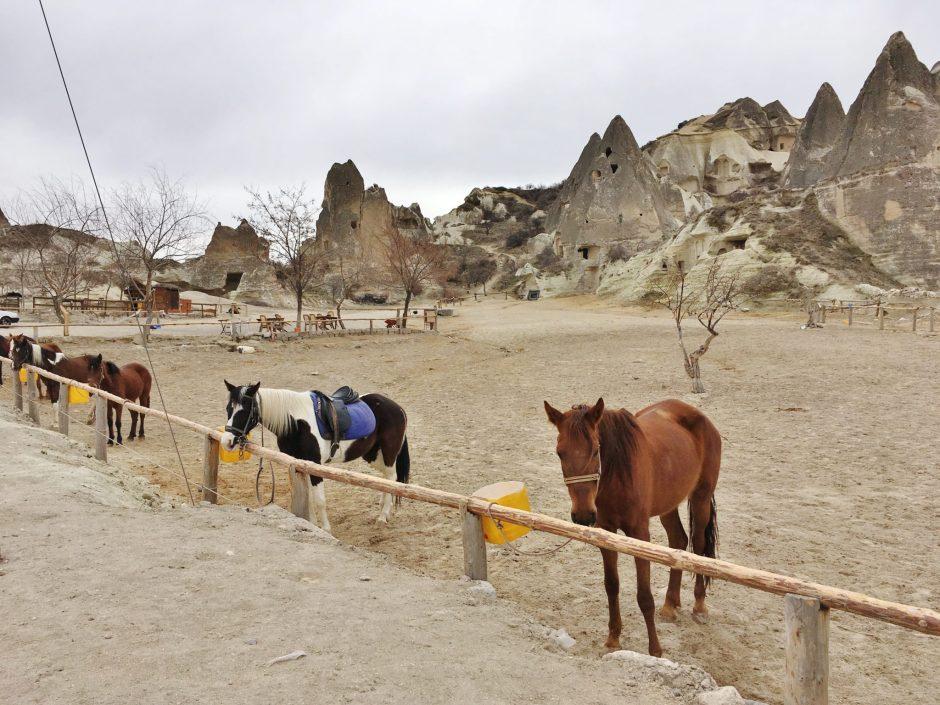 Horses wait by a fence in Cappadocia, Turkey