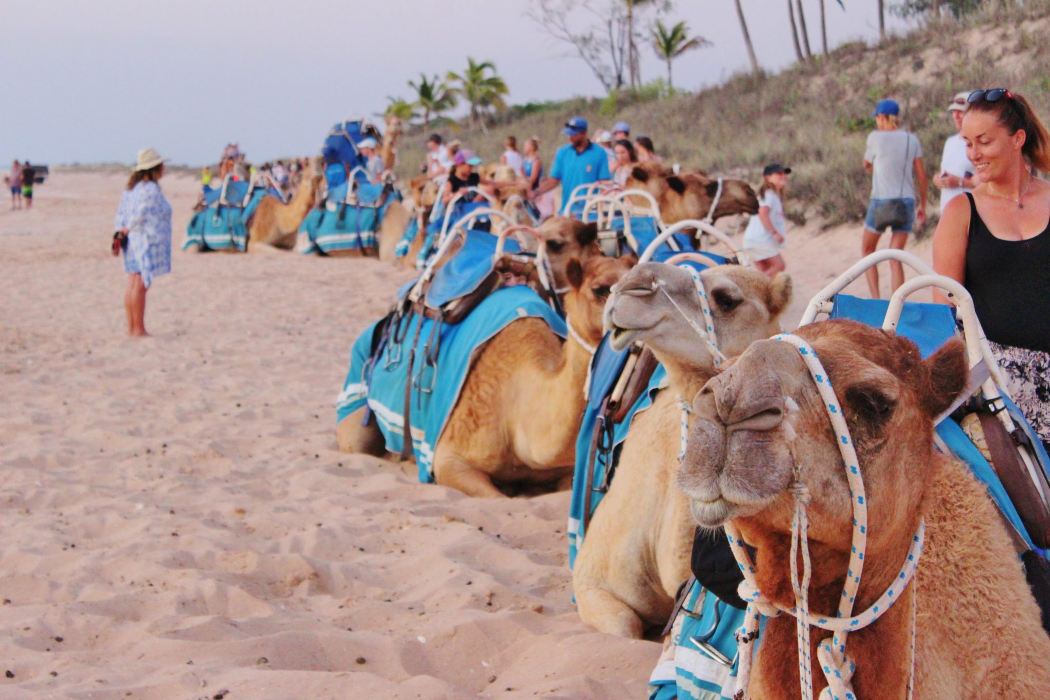 Camels on Cable Beach, Broome, Australia