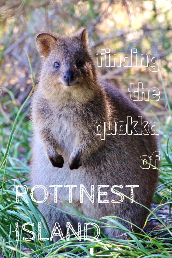 Finding the quokkas of Rottnest Island, Australia