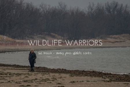Wildlife Warriors - Sue Meech of Sandy Pines Wildlife Centre, Ontario, Canada