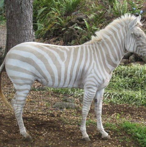 30 rare albino animals