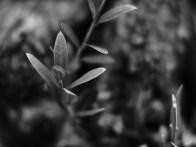 Nocturnus 0,95/35mm, Olympus OM-D-EM1 - www.thomas-adorff.de