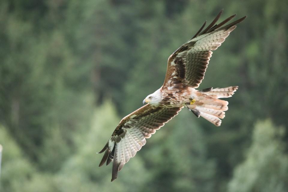 2016-08-09 Greifvogelpark_007_(5388)