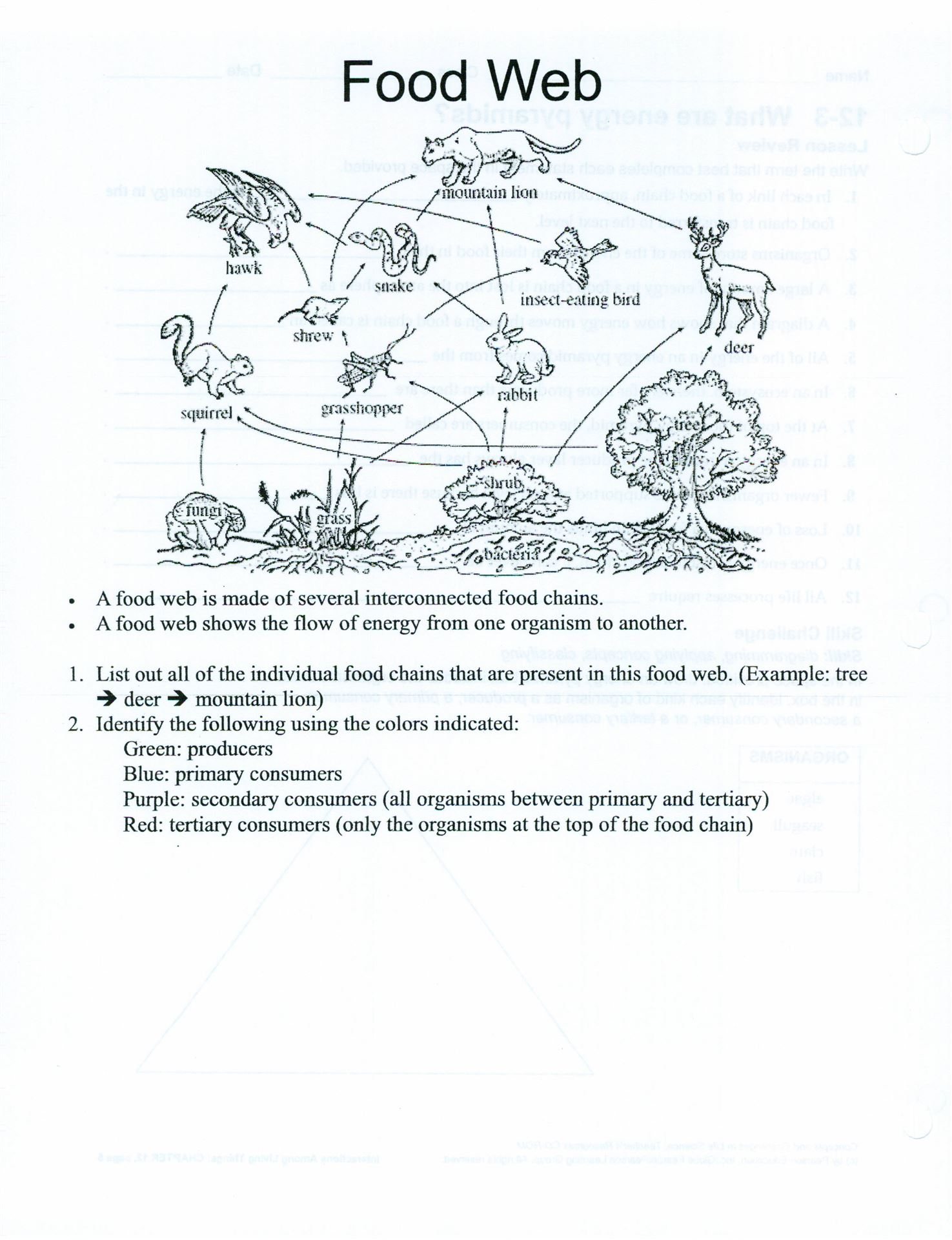 Printable Food Web Worksheet