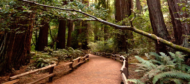 Mill Valley - Muir Woods Photo