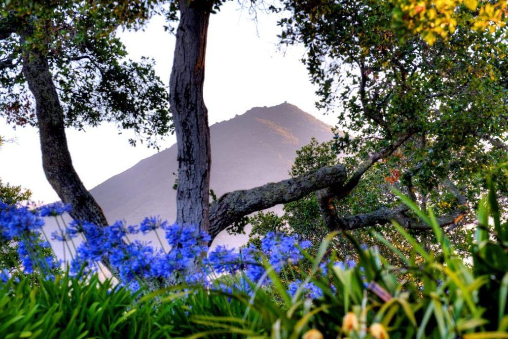 photo of Mt. Tamalpais through trees
