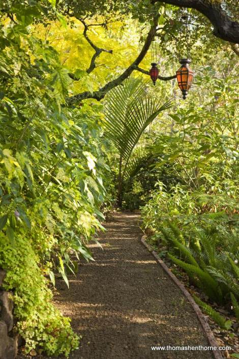 Gravel garden pathway with abutilon and live oaks