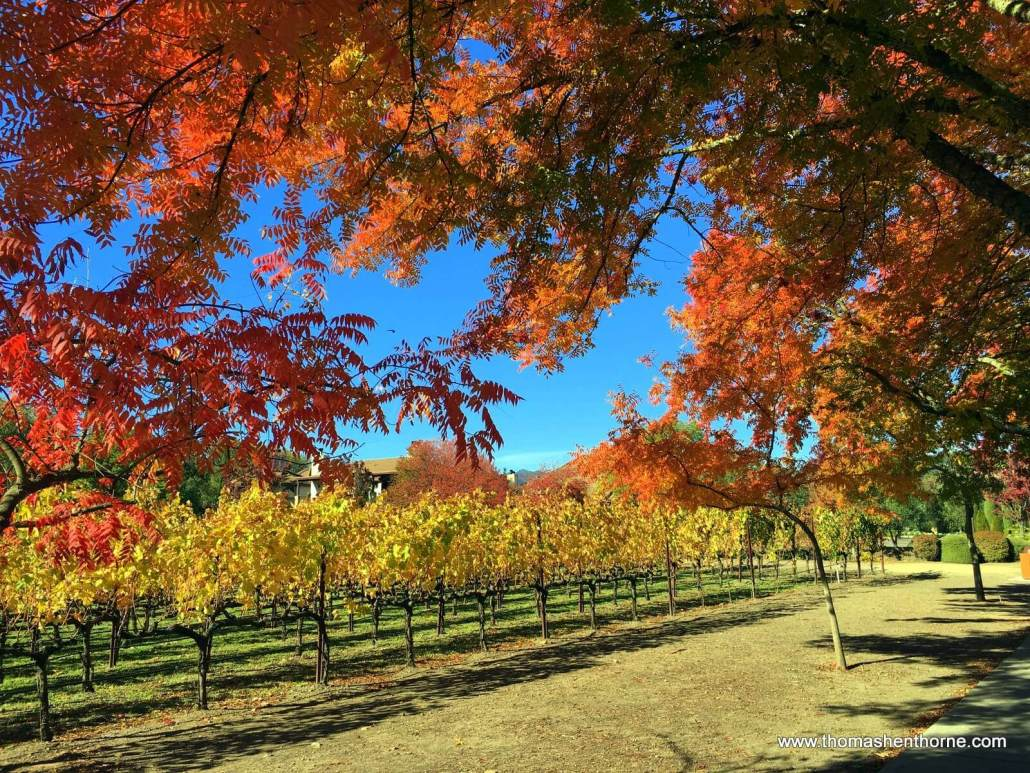 Fall leaves in Yountville, California, Napa County