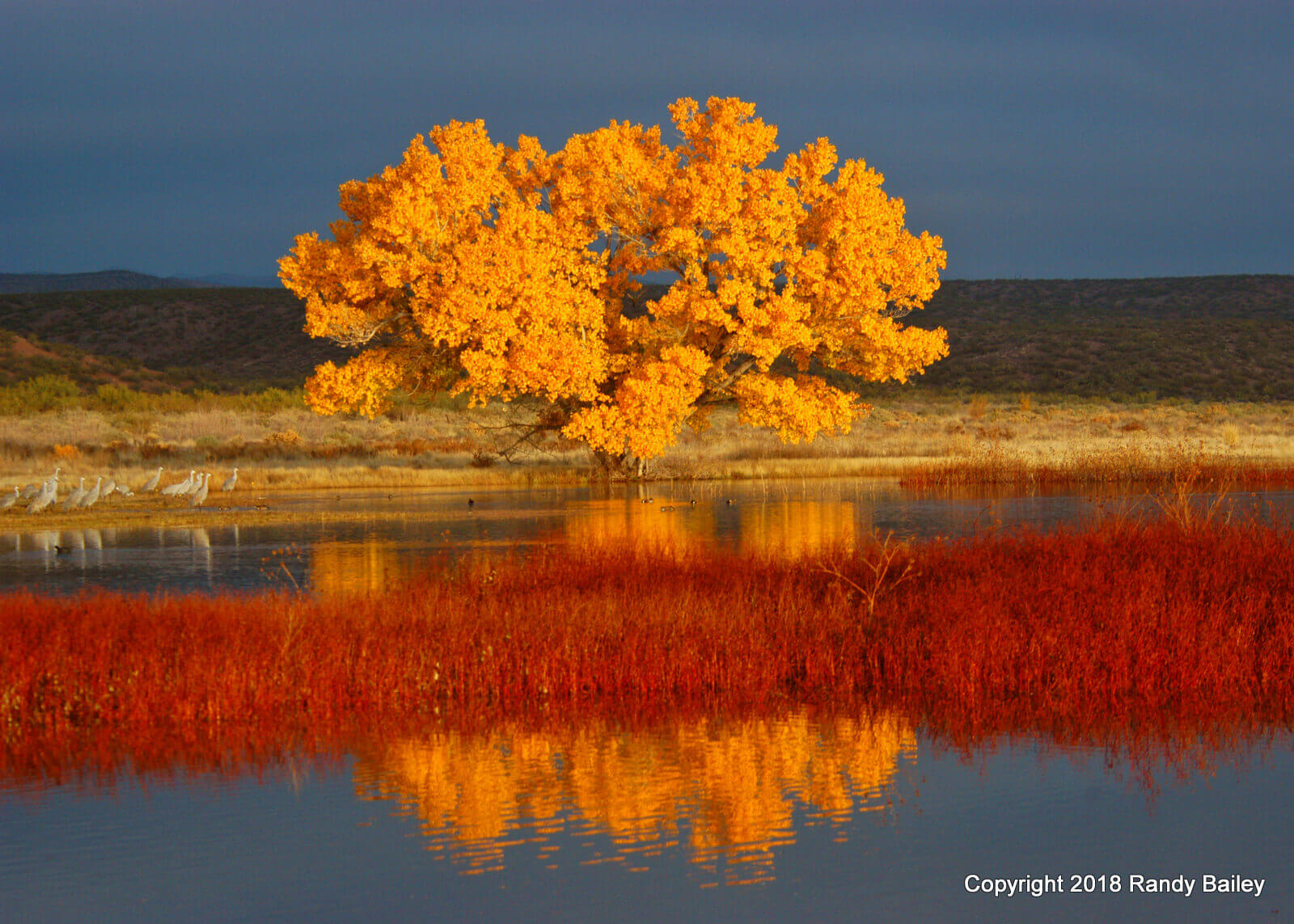 Randy Bailey Cottonwood Sunrise