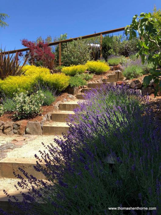 Garden steps with lavender