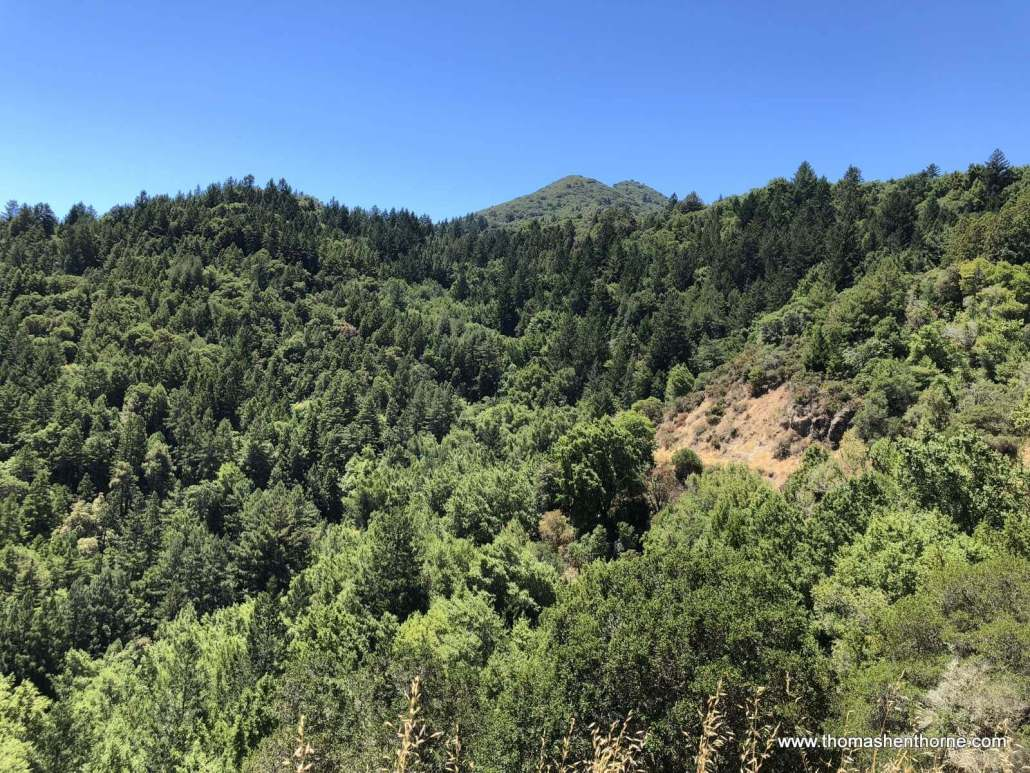 Crown Road Hike first peek of Mt Tamalpais