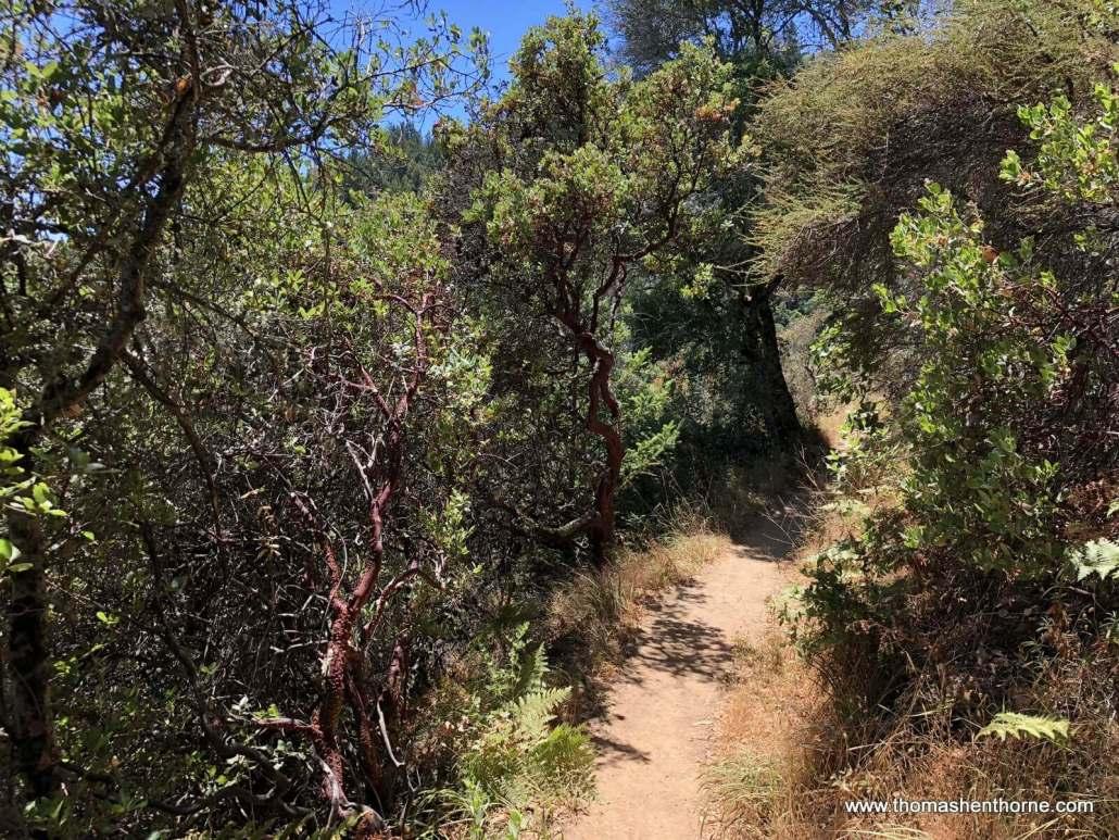 Early part of Hoo Koo E Koo Trail