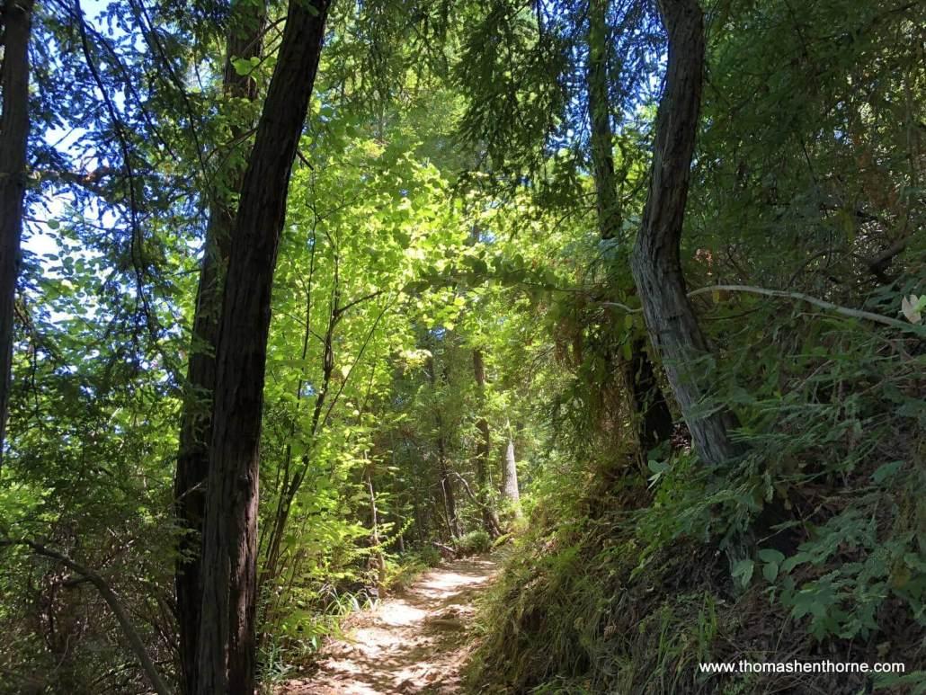 Beautiful trail light Hoo Koo E Koo Trail