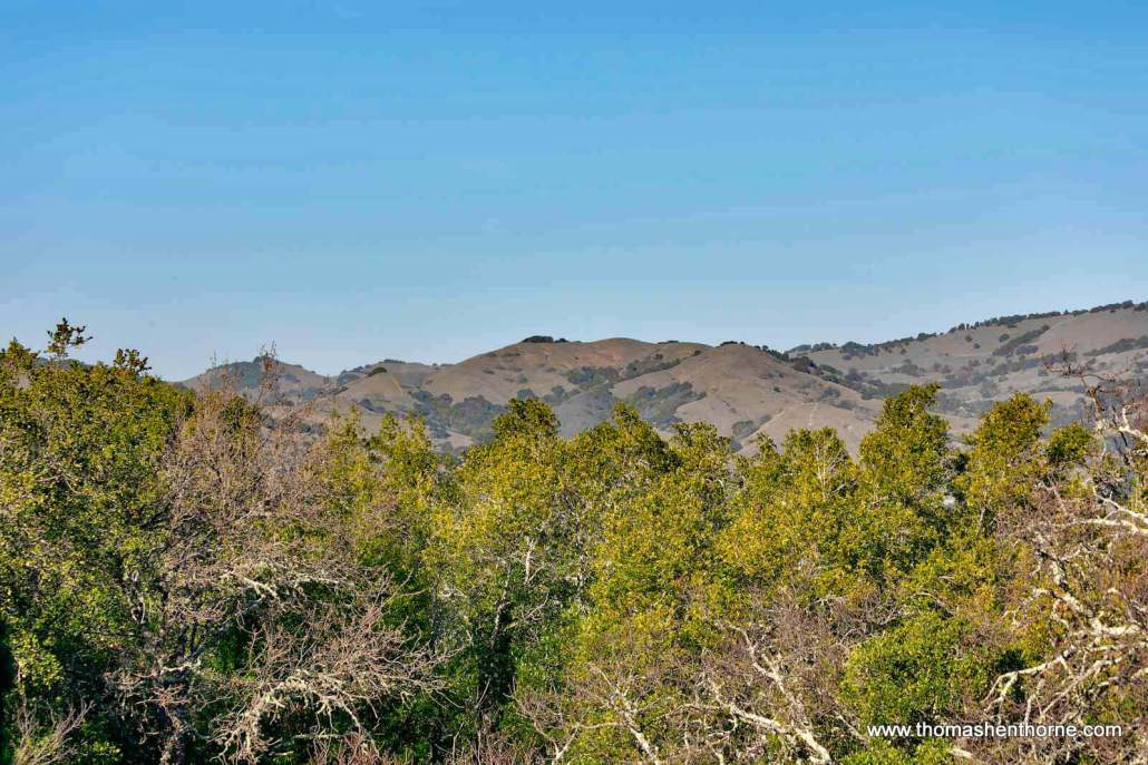 view of Novato hills