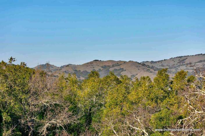 view of Novato hills