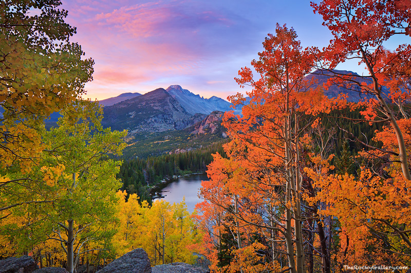 Autumn Glory At Bear Lake  Rocky Mountain National Park