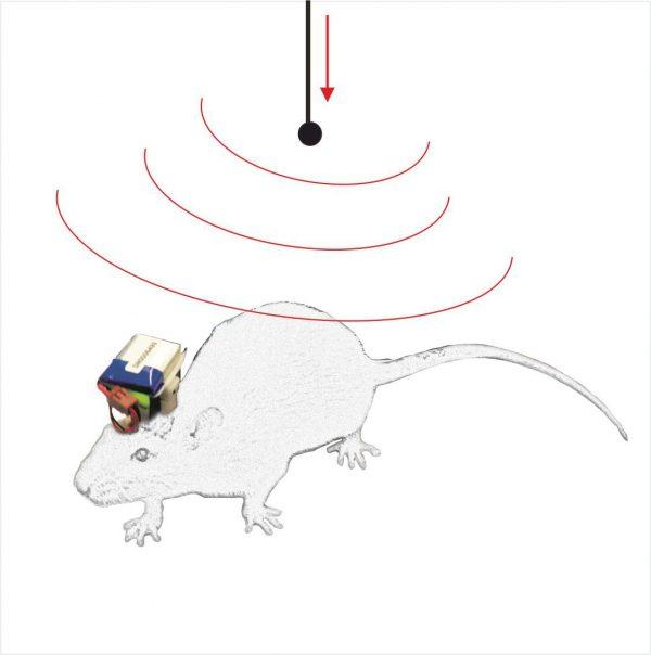 Thomas Wireless System (TWS)
